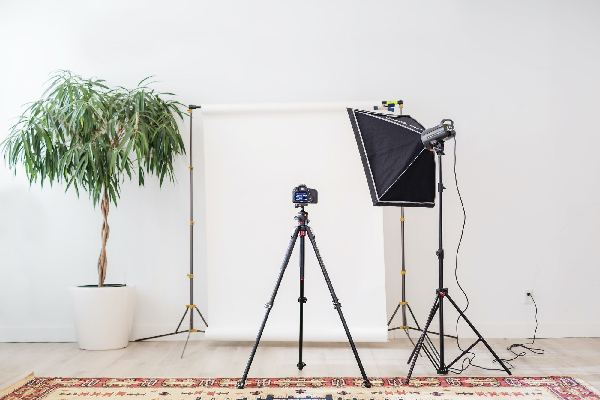 In-home camera set up with tripod, lights and a plant