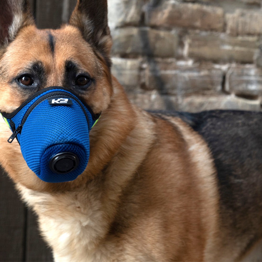 A brown dog in a blue mask made by K9 Mask.