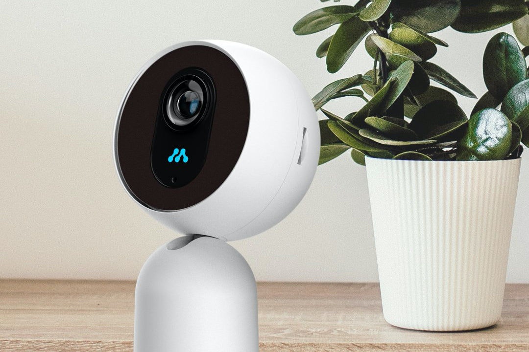 A home security camera sitting in front of a house plant