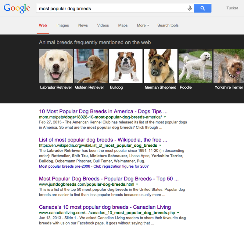What's Popular in the Dog Community?