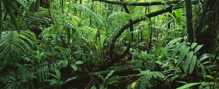 Chipkos Protects +1 Million sq ft of Rain Forest
