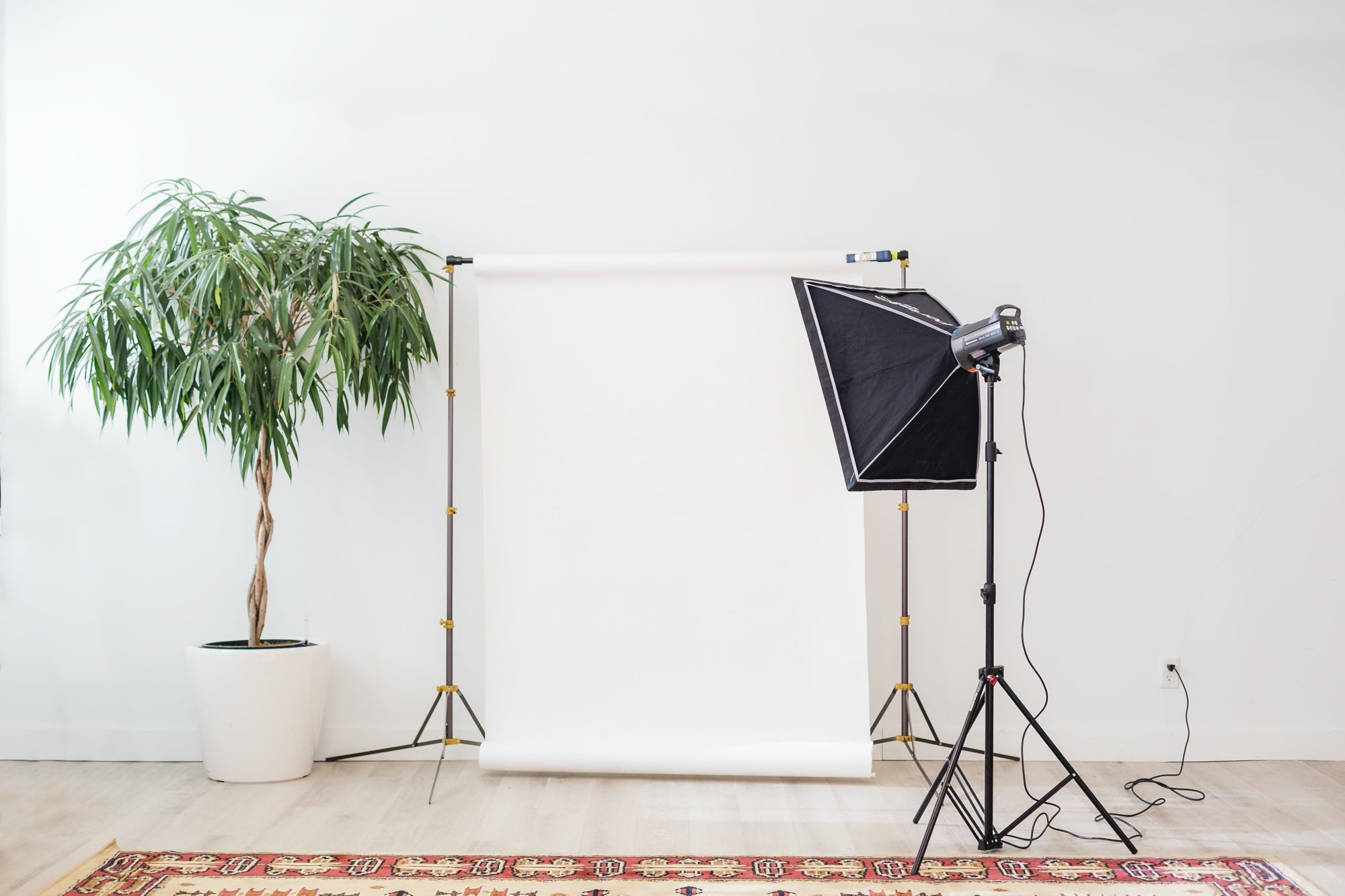 Home photography studio set up with lights, a backdrop, and a plant