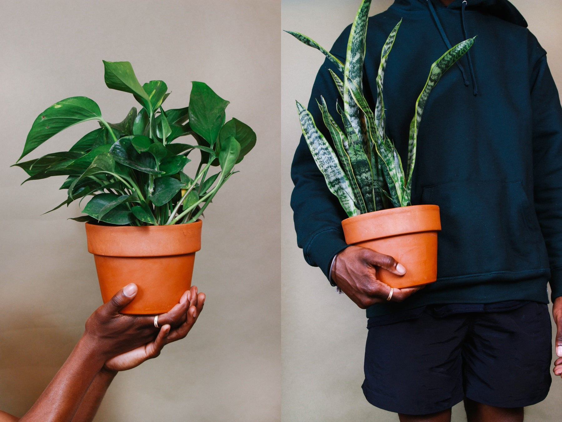 Side by side images of people holding plants in terracotta pots