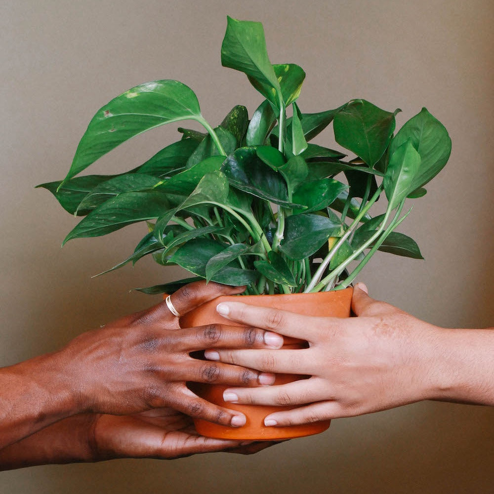 Two people hold one plant in a terracotta pot