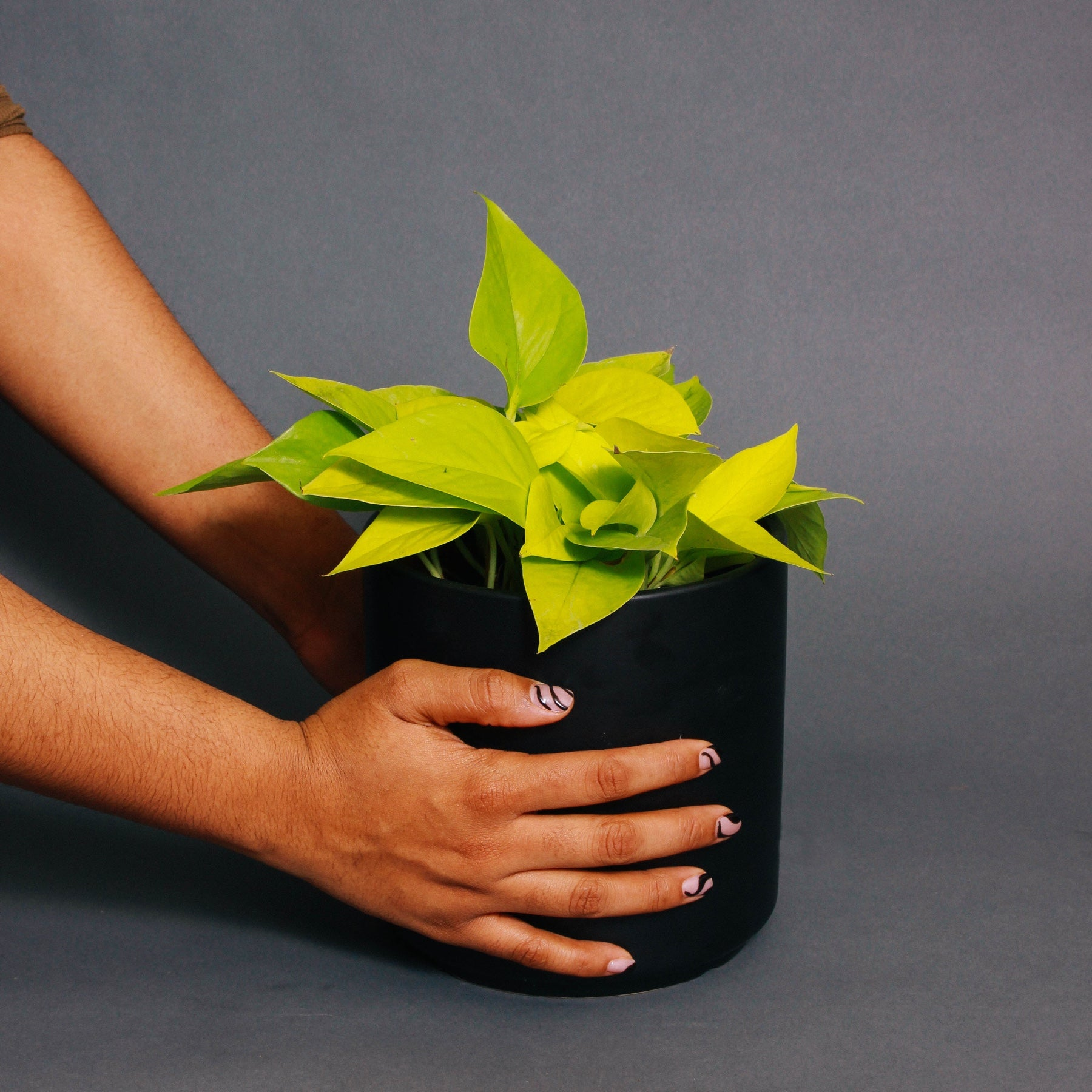 Hands place a potted plant on a grey surface