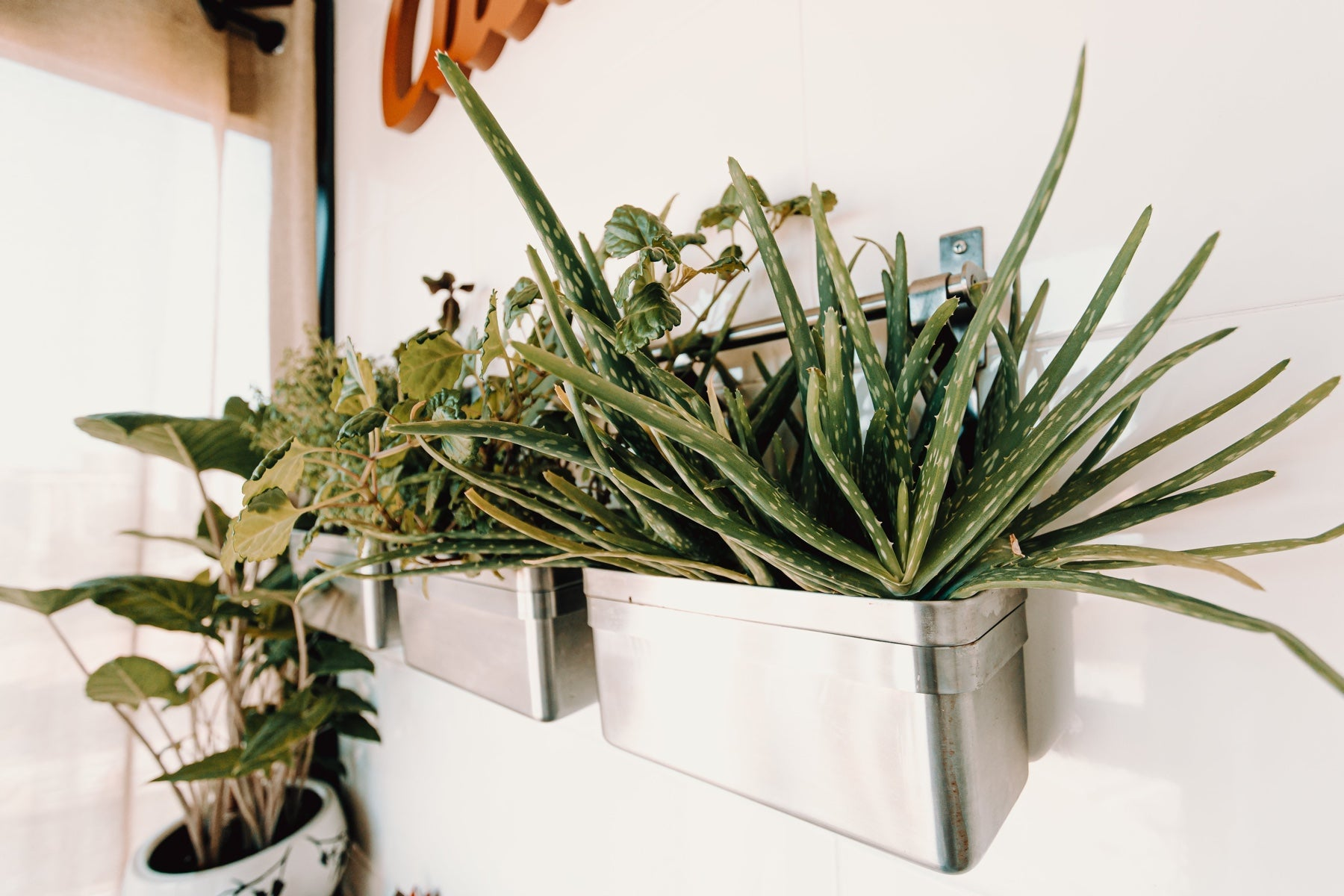 Plants sit in a hanging planter on a wall