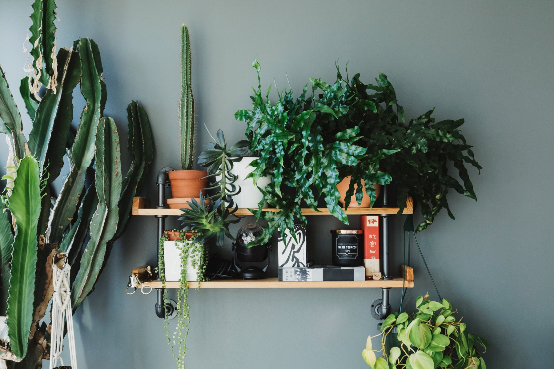 Plants lined up on a shelf on the wall