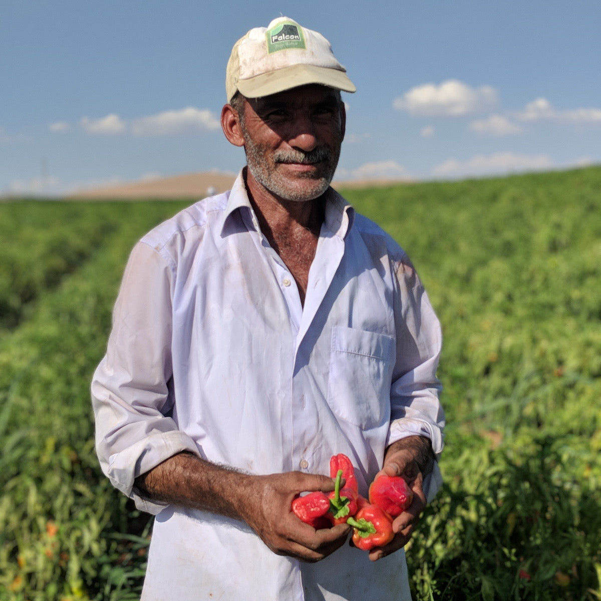 A chilis farmer in Tukry holding his peppers in a field.