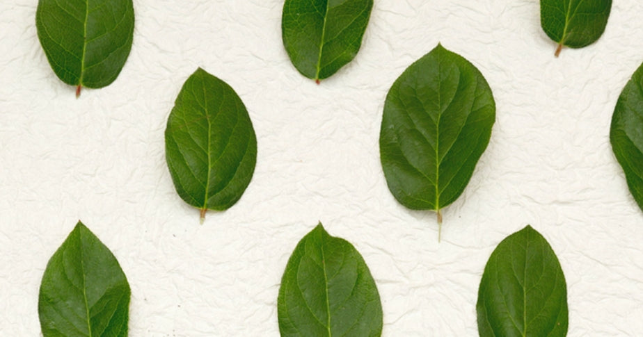 leaves representing different ways to start an online store