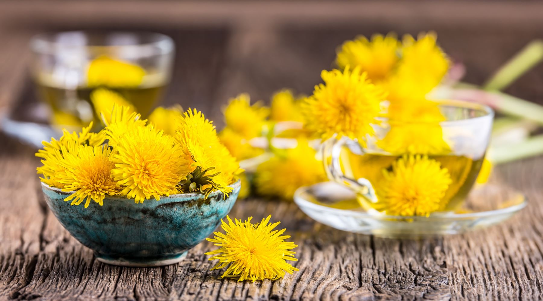 How to Make Dandelion Tea - Recipes and Benefits