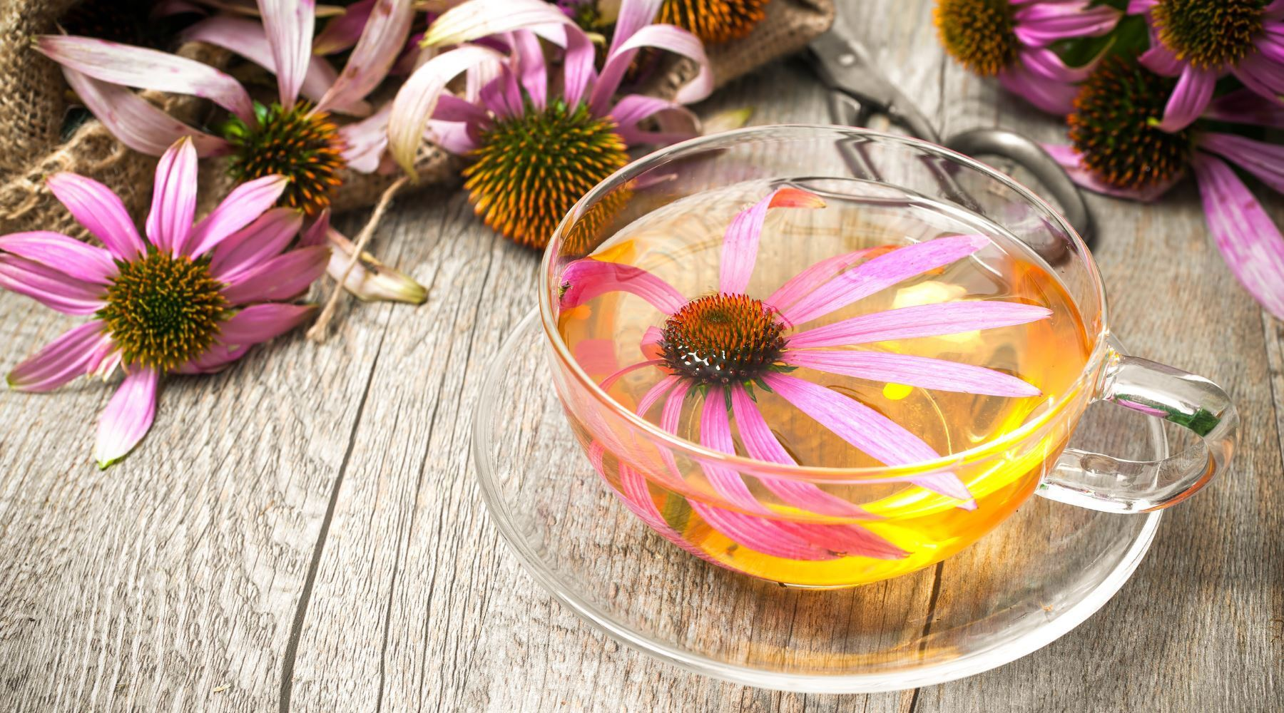 What Is Echinacea Tea? And Can It Help a Cold?