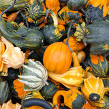 squash-soup-infant-baby-thanksgiving-food