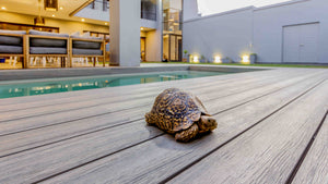 Evalast I Series Composite Decking in Perth with our pet turtle Decky