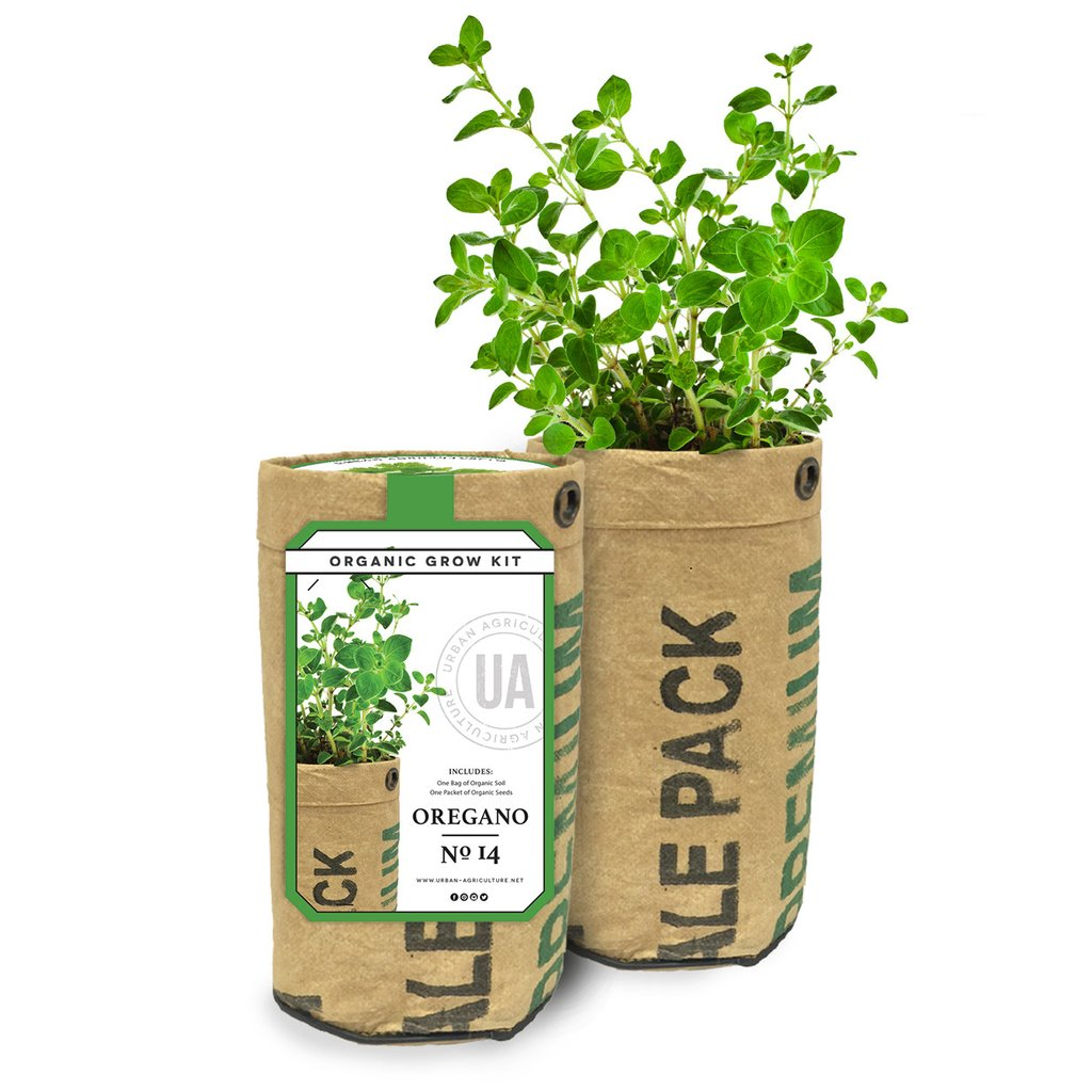 SALE organic oregano grow kit