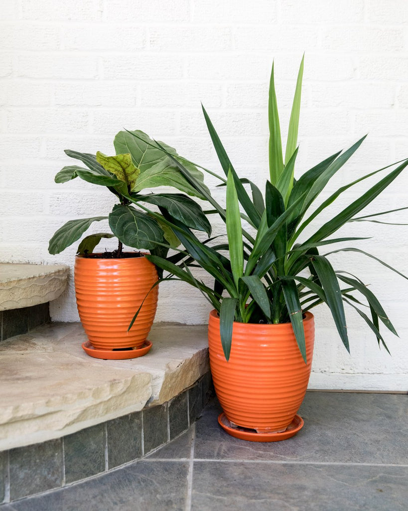 tangerine planter set