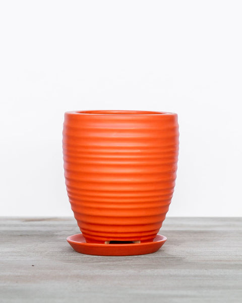 large tangerine planter