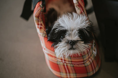 Dog Backpacks & Bags