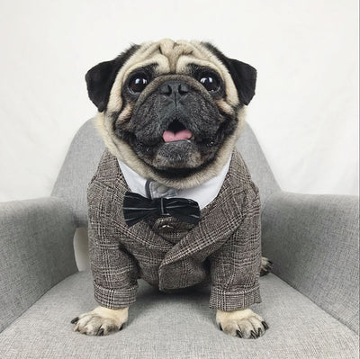 Dog Suits, Ties And Dress Shirts For All His Fancy Occasions - thediggitydogstore.com