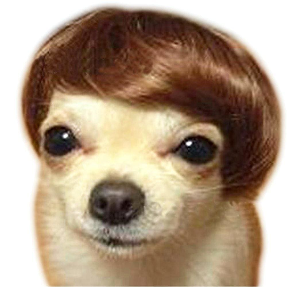Dog Wig That Will Make Your Friends Howl With Laughter This Halloween! - thediggitydogstore.com