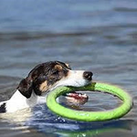 Flying Rubber Rings, For Chasing & Chewing! - thediggitydogstore.com