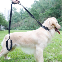 Large Dog Anti Pull Shock Absorbing Training leash  With 2 Control Handles - thediggitydogstore.com