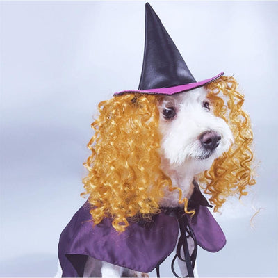 Make Your Dog Into An Adorable Witch S-XL - thediggitydogstore.com