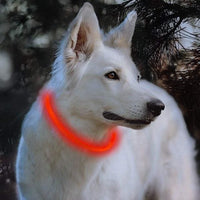 Rechargeable Glowing Dog Collar - thediggitydogstore.com