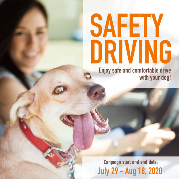SAFETY DRIVING - 3 important ideas to go out with your pets