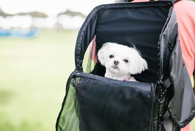 3 Way Back Pack Carrier with dog