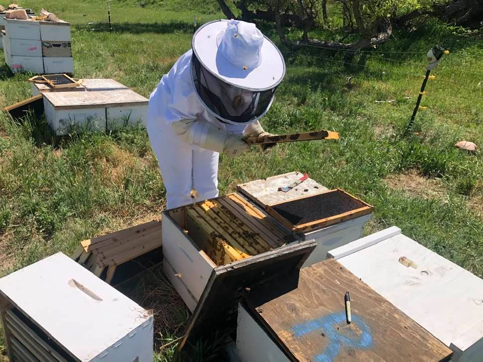 Recorded E-Learning Brass Tacks Basic Beekeeping Course