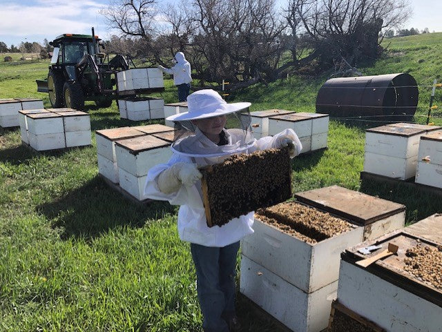 Live Online E-Learning Brass Tacks Basic Beekeeping Class  Saturday, March 28, 2020 Time:  9 am to 3 pm