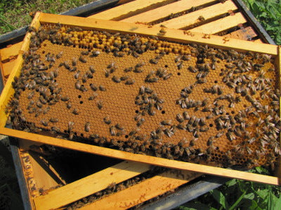 Splitting Hives Class with Dann Purvis  Saturday, April 4, 2020 Time: 10 am to 12:30 pm