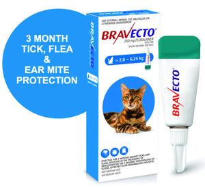 Bravecto Spot on for cats - The Vet Store Online