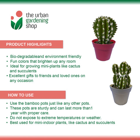 4 + 2 BUNDLE:  ECO-FRIENDLY BAMBOO FIBER POTS Ideal For Growing Cactus and Succulents