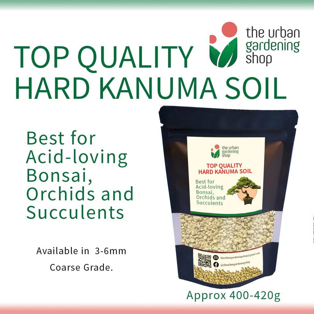 KANUMA SOIL  Top Quality Bonsai Soil for Potted Plants Bonsai and Succulents