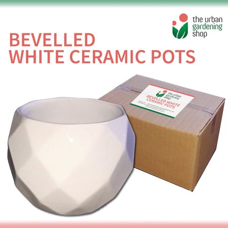 BEVELLED WHITE CERAMIC POTS Elegant Pot Design for Small Indoor Plants and Succulents