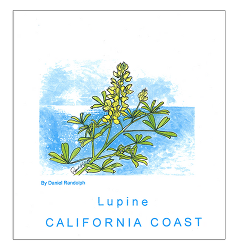 Lupine California Coast