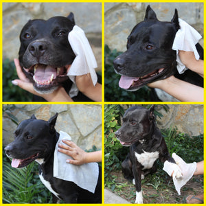 Cleapet Wet Towel - Monthly Pack x3
