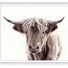 "Highland Cow - Close Encounters Collection framed with glass 19""x 23"" (2 in stock)"