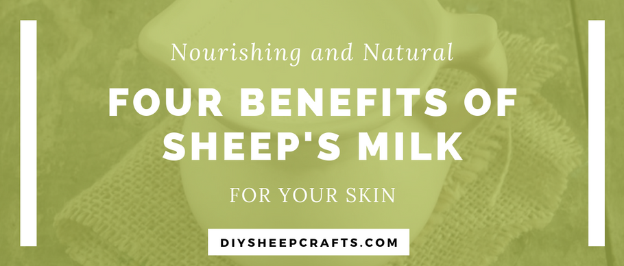 4 Benefits of Sheep Milk for Skin | body, bath, health