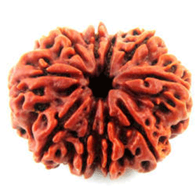 Ten mukhi rudraksha shop in dubai, uae
