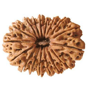Sixteen mukhi rudraksha shop in dubai, uae