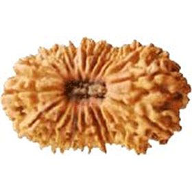 Twentyone mukhi rudraksha shop in dubai uae