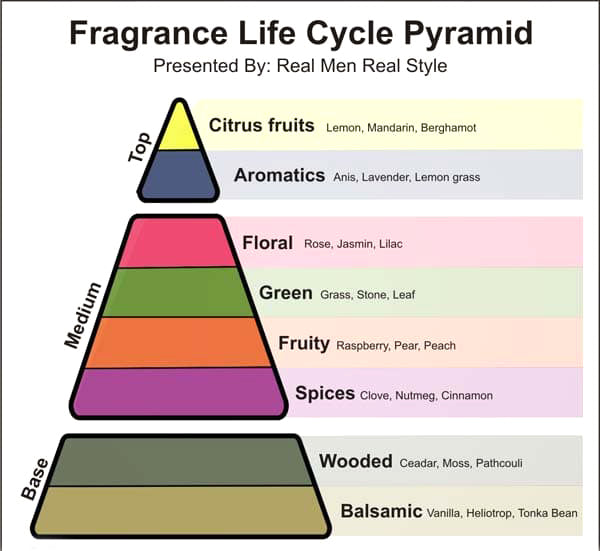 fragrance cologne life cycle illustration