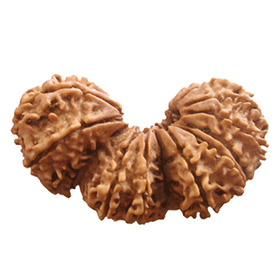 Trijuti rudraksha shop in dubai uae