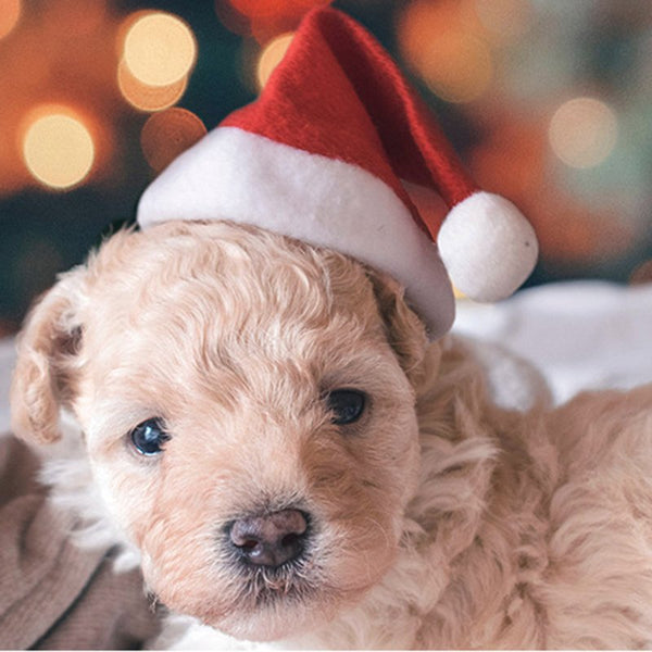 Christmas pet hat