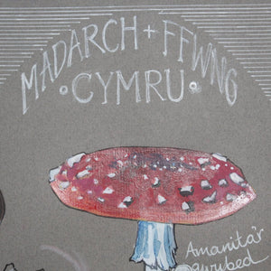 Madarch a Ffwng - Mushrooms and Fungi