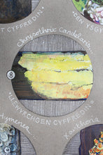 Load image into Gallery viewer, Lichens - Cennau