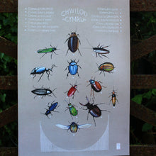 Load image into Gallery viewer, Chwilod - Beetles