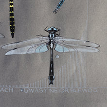 Load image into Gallery viewer, Gweision Neidr - Dragonflies